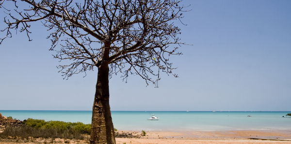Boab prison tree in Broome